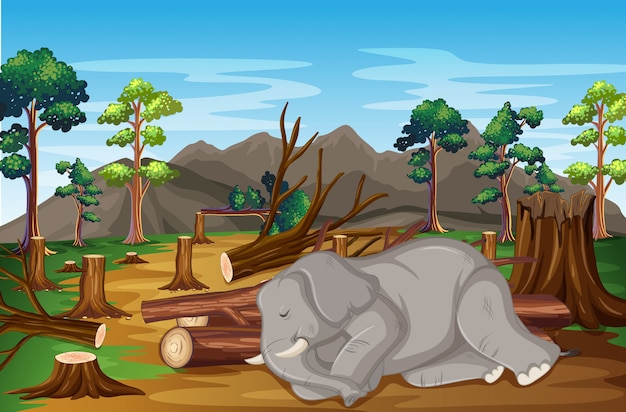 Scene with sick elephant and deforestation