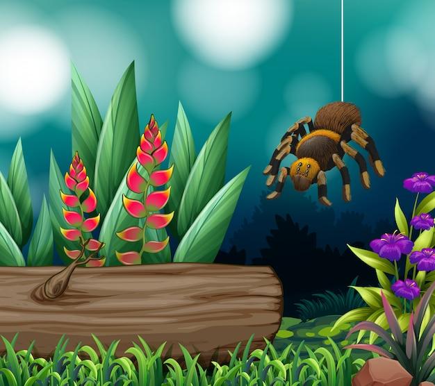 Сцена с пауком в лесу