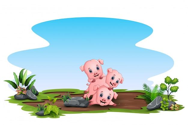 3 마리의 돼지가 현장에서 놀고있는 장면