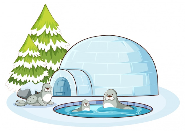 Scene with three seals and igloo