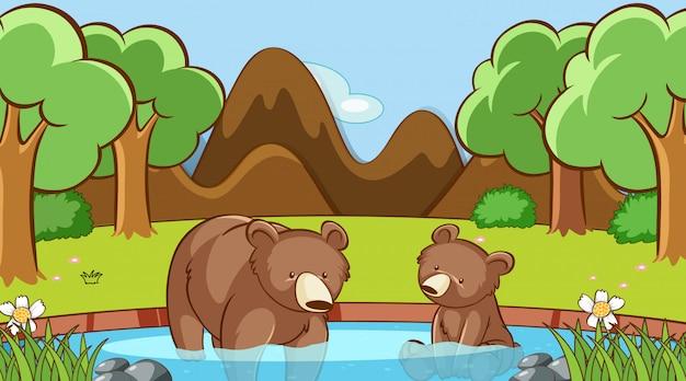 Сцена с двумя медведями в лесу