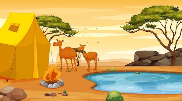砂漠で2頭のラクダがいるシーン