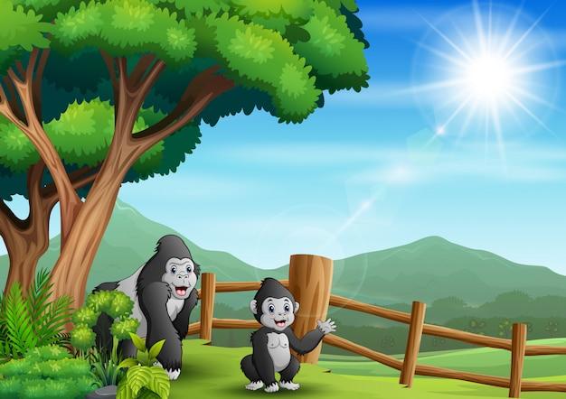 動物園の図に2つのゴリラのシーン