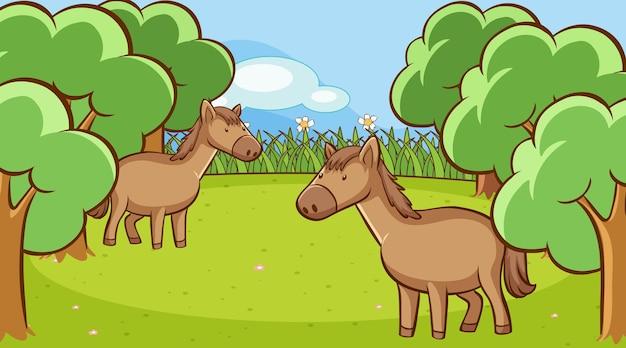 Scena con due cavalli nella foresta