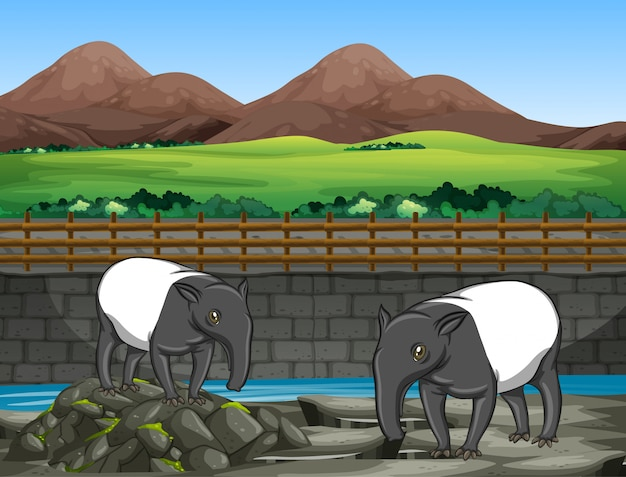 Scene with two tapirs at the zoo