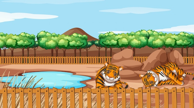 Scene with two tigers at the zoo