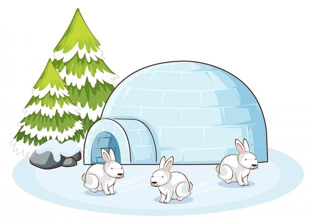 Сцена с белыми кроликами зимой