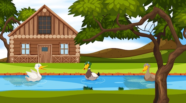Scene with wooden cottage in the field and ducks in the river