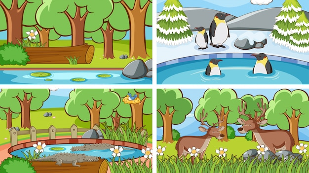 Scenes of animals in the wild illustration