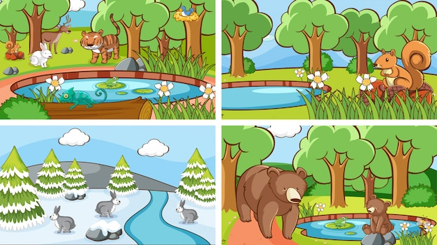 Scenes of animals in the wild