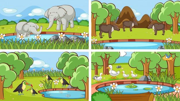 野生の動物のシーン