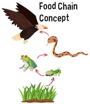 Концепция пищевой пищевой цепи