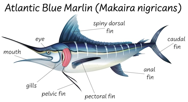 魚の科学内部解剖学