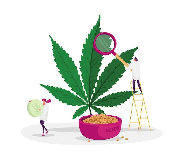 温室で大麻の植物と種子をチェックする科学者のキャラクター