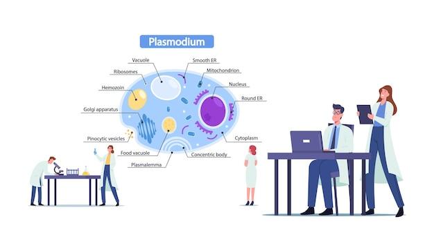 マラリア原虫の寄生虫を学ぶ科学者の男性と女性のキャラクター。巨大なインフォグラフィックの小さな微生物学の医師が、すべてのパーツで細胞の内面図を提示します。漫画の人々のベクトル図