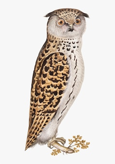 Scops owl in vintage style