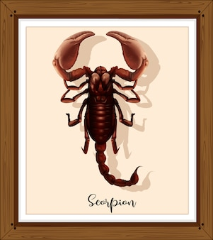 Скорпион на деревянной раме