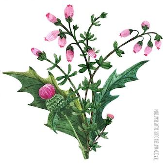Scottish wild plants boutonniere, thistle bouquet