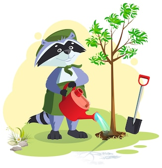 Разведчик сажает и поливает дерево. бойскаутский енот заботится о природе. векторные иллюстрации шаржа