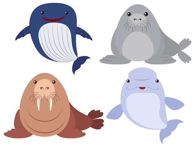 Sea animals on white background