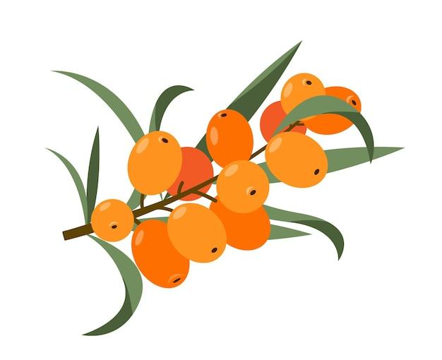Оранжевые ягоды облепихи на ветке с зелеными листьями иллюстрации