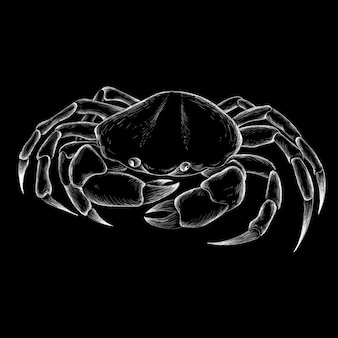 Sea crab hand drawn