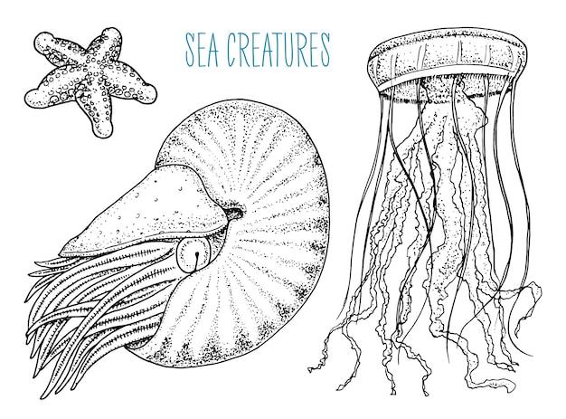 海の生き物ノーチラスポンピリウス、クラゲ、ヒトデ。貝または軟体動物またはハマグリ。古いスケッチ、ビンテージスタイルで刻まれた刻まれた手。航海や海洋、モンスターや食べ物。海の動物。