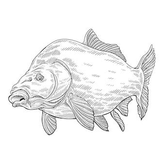 Sea fish or ocean fish