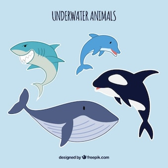 Sea life animals