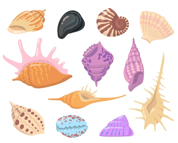 Sea or ocean shell objects flat illustration set. cartoon colorful seashells isolated vector illustration collection. water nature and decoration concept