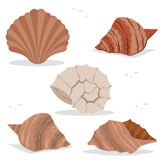Sea and ocean shells of different shapes vector flat icon set isolated