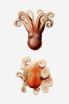 Sea octopuses in vintage style
