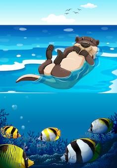 바다에서 수영하는 해달