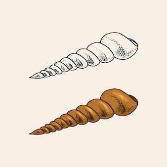 Морские раковины или моллюски разных форм с гравировкой рисованной
