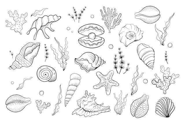 Морская раковина жемчужная линия искусства летнее время пляжная раковина вектор handdrawn морская ракушка