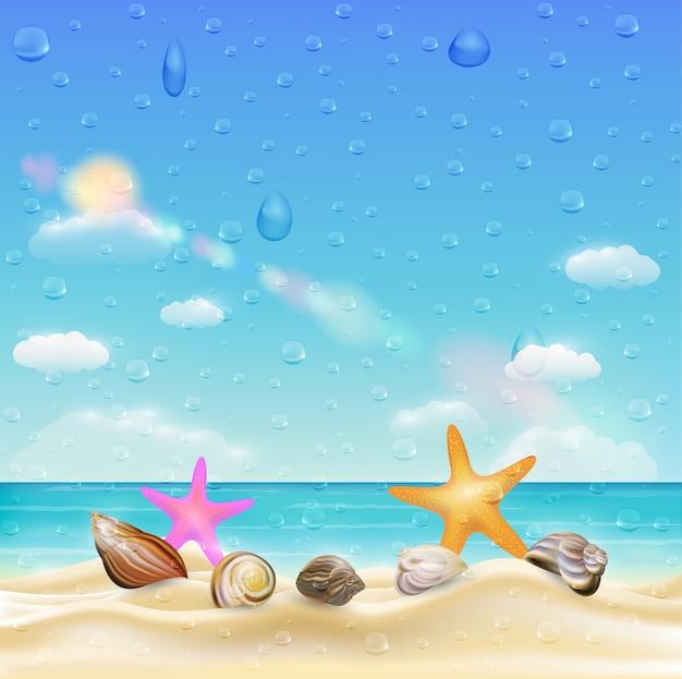 Sea shell and starfish