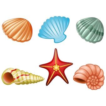 海の殻と海の星