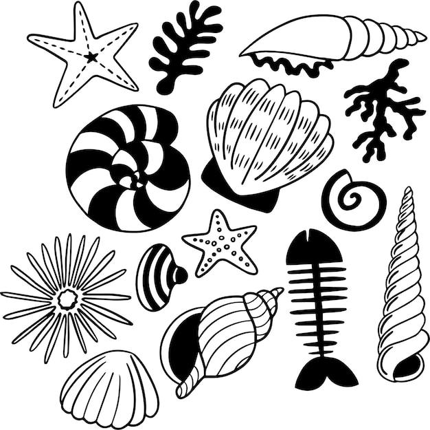 貝殻落書き