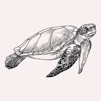 Sea turtle black and white illustration