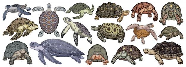 ウミガメの漫画は、アイコンを設定します。白い背景の上の図のカメ。漫画セットアイコンウミガメを分離します。