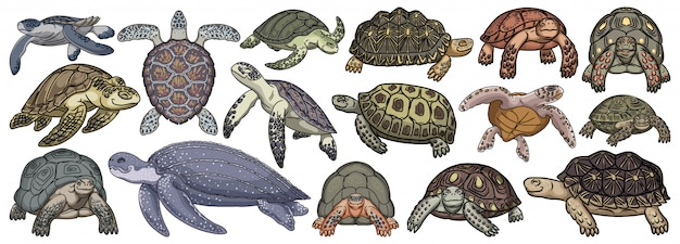 Sea turtle cartoon set icon. illustration tortoise on white background. isolate cartoon set icon sea turtle.