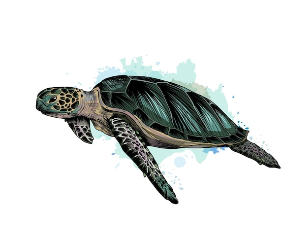 Sea turtle from a splash of watercolor, colored drawing, realistic.