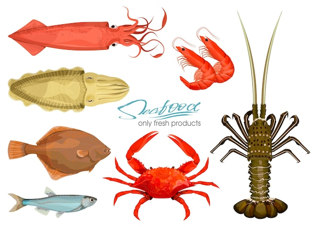 Seafood in cartoon style. icons. vector illustrations. set squid, cuttlefish, crab, shrimp, spiny lobster, flounder fish, sprat isolated on white background. inhabitant wildlife of underwater world.