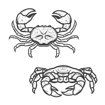 Seafood crab, marine crustacean lobster