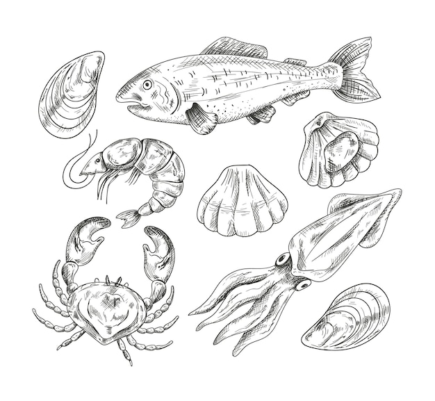 Seafood mollusk salmon fish shrimp shell crab hand draen pencil sketch