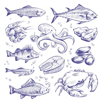 Seafoods hand drawn. sea fishes oysters mussels lobster squid octopus crabs prawns salmon shellfish natural sea food