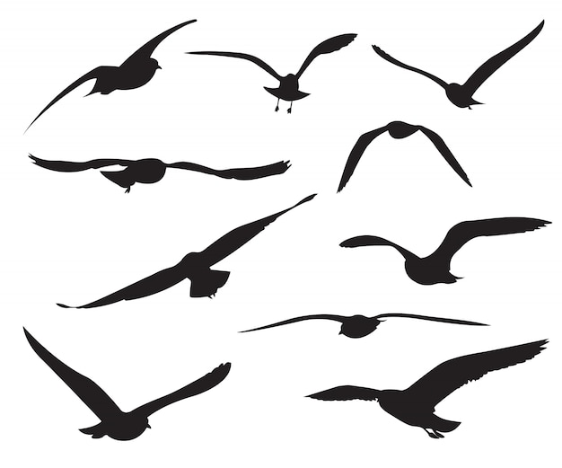 seagull vectors photos and psd files free download rh freepik com seagull vector art seagull vector free download