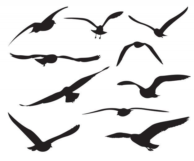 seagull vectors photos and psd files free download rh freepik com seagull vector silhouette seagull vector image