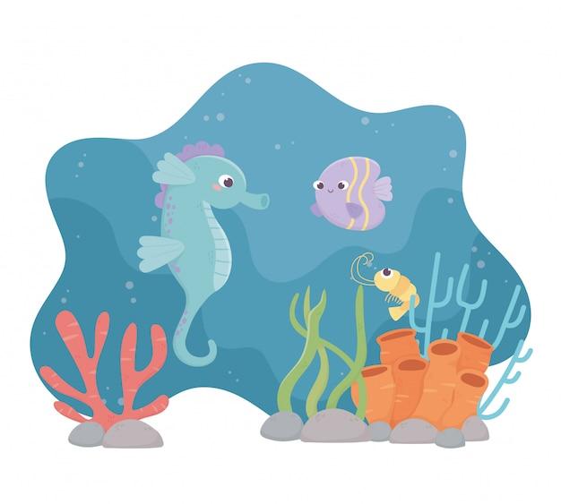 Seahorse fish shrimp life coral reef under the sea