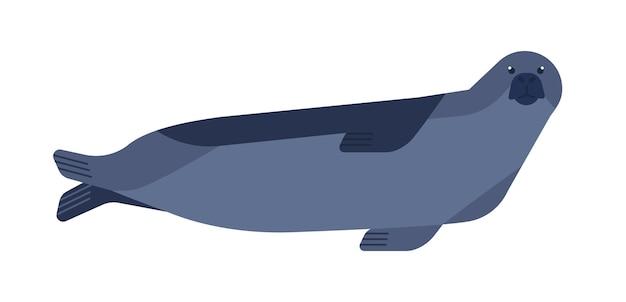 Печать плоских векторных иллюстраций. любопытный минималистский рисунок водных млекопитающих на белом фоне. ластоногое животное, обитающее в холодных регионах. полуморской хищник, фока, виды phocidae клипарт.